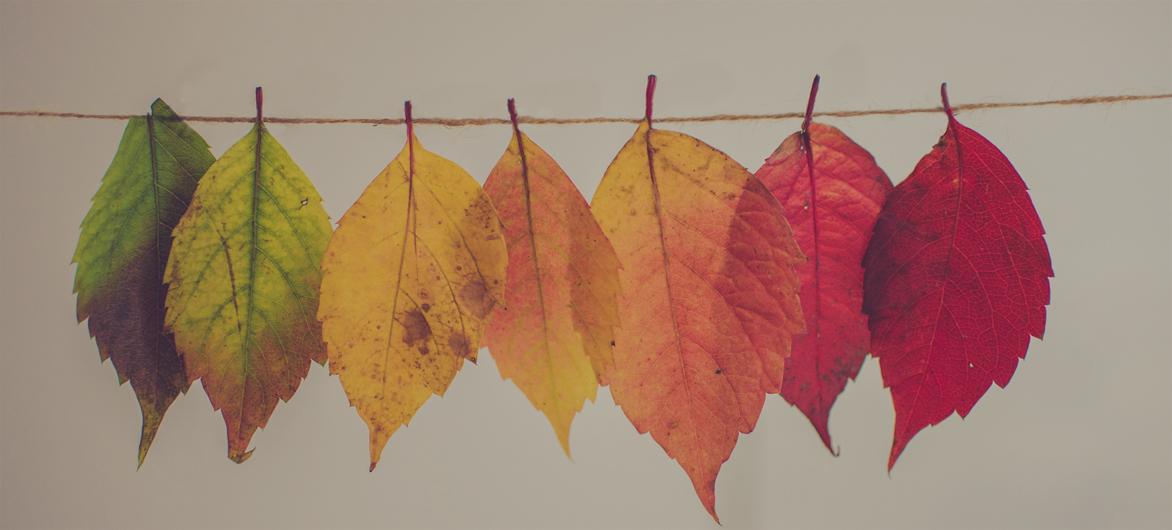 学配色?!先学会如何取得协调的色彩?