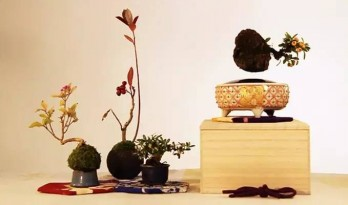 Air bonsai:打造你的植物星球
