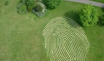 如何利用一块草坪,美化整个景观空间