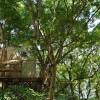 像鸟儿一样栖息于树间——鸟巢茶亭