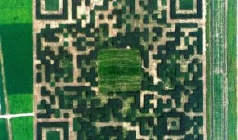 小镇规划新突破:13万棵树种出世界最大的植物二维码...