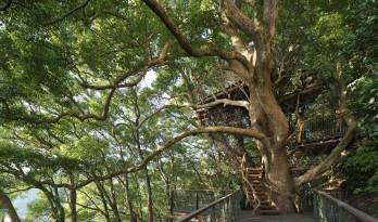 乌鸦与树屋的故事