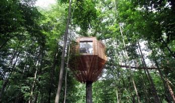 远离大地,环绕大树,隐匿于林中的人类栖息地