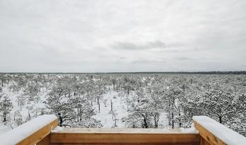 爱沙尼亚瞭望台 让你近距离感受沼泽飞鸟