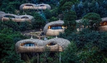 隐于茂密丛林中的豪华酒店——Bisate 度假屋 / Nicholas Plewman Architects