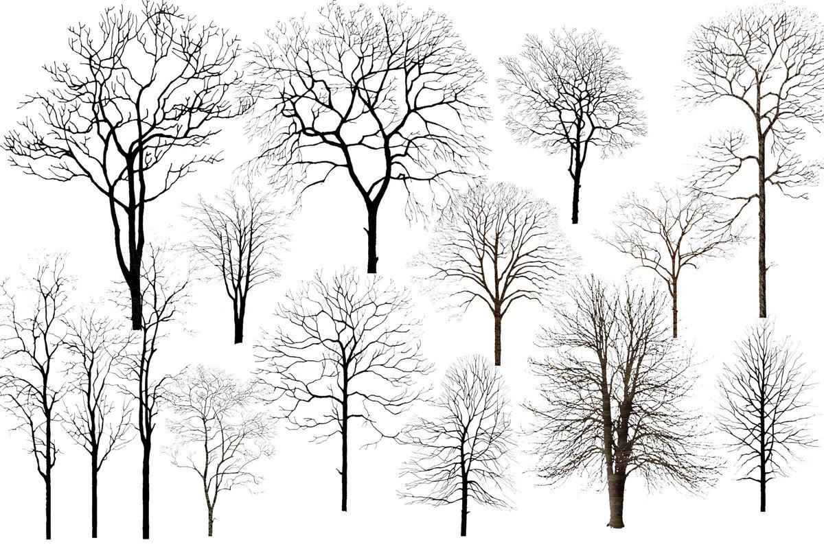 今天送上的素材是: 冬日雪景必备素材——枯树 预览图在此 原文件都