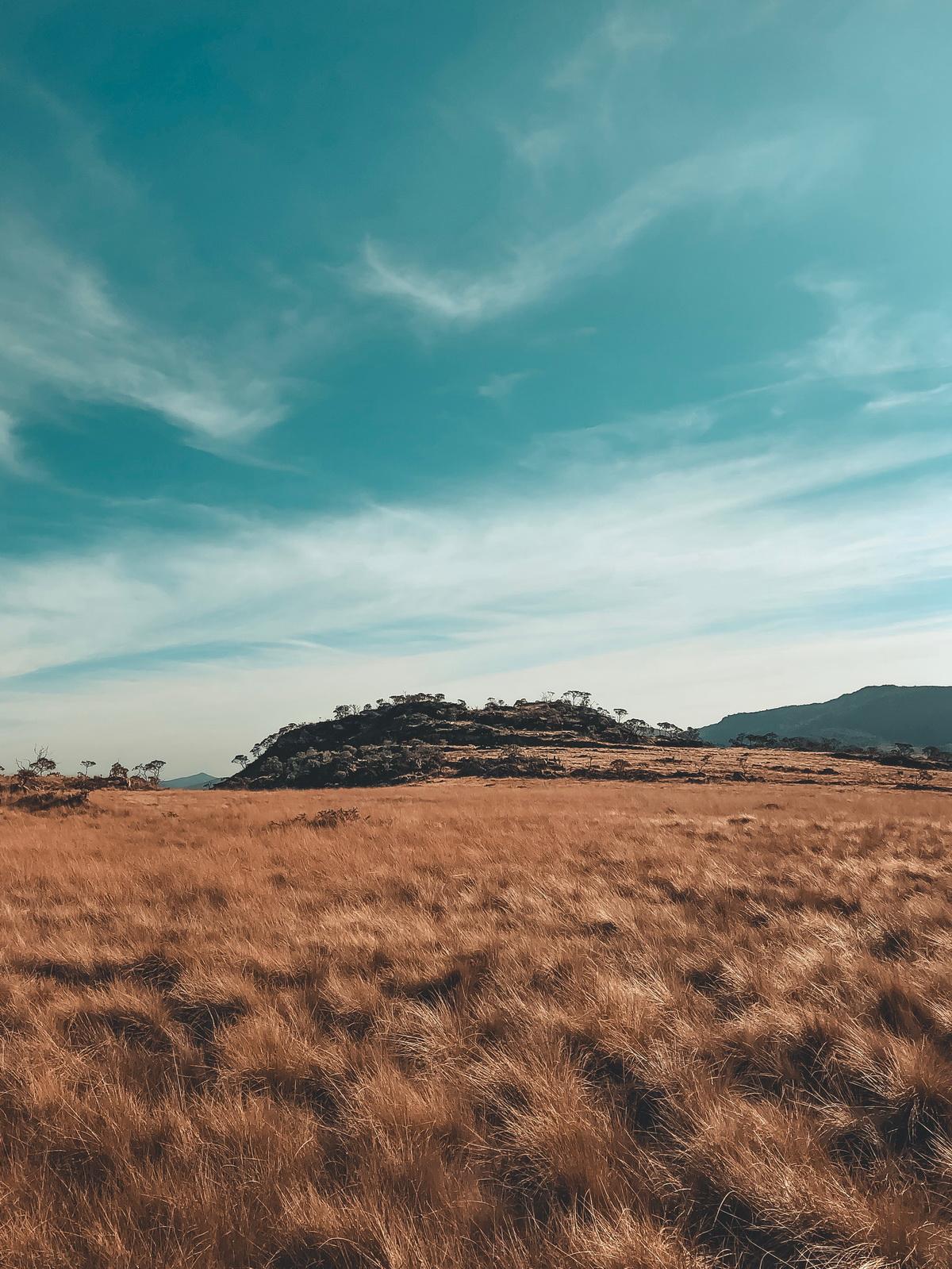 cropland-farmland-field-1756325.jpg