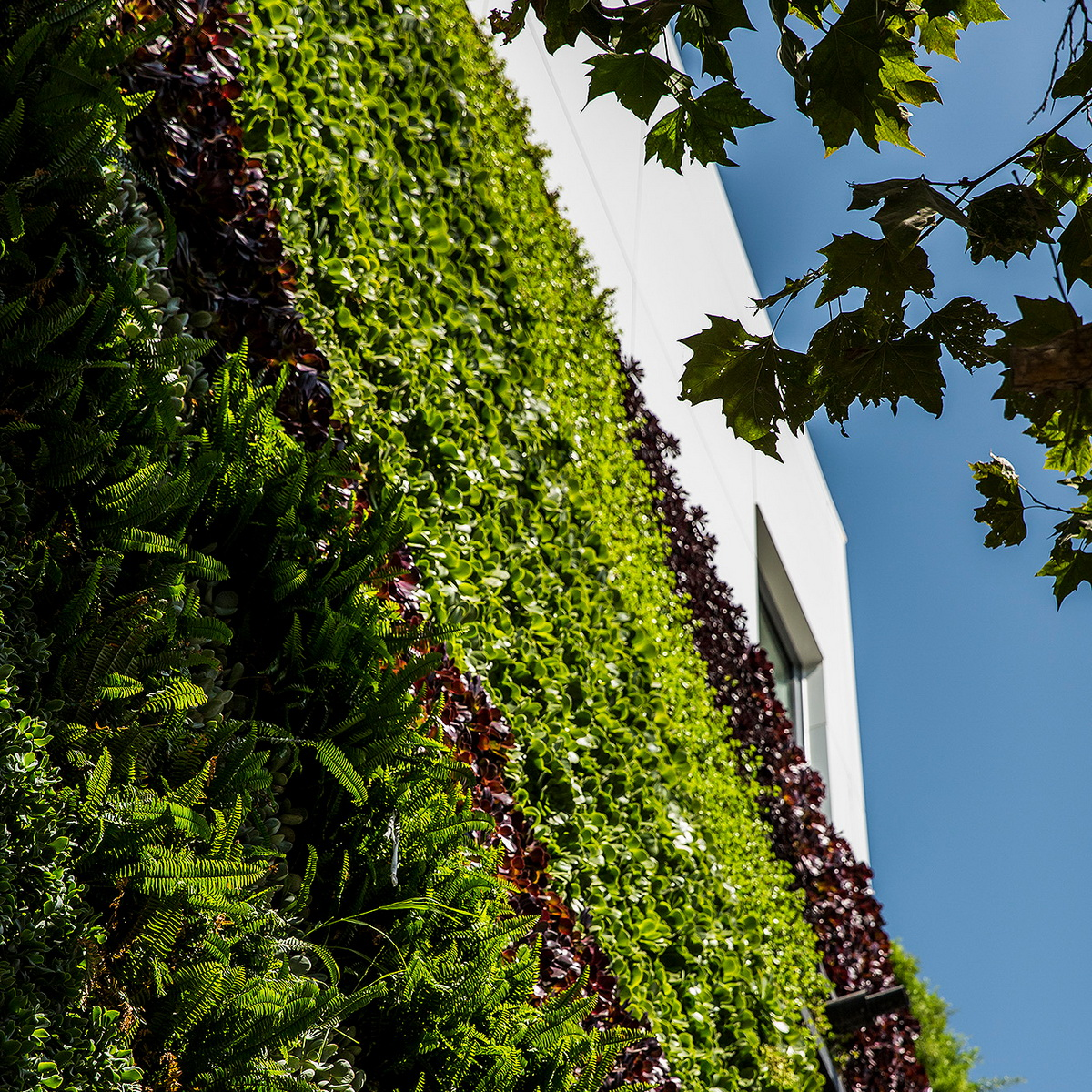 e1 _MAD_Gardenhouse_Green Wall_photo by Manolo Langis_调整大小.jpg